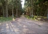 Skogen står ännu kvar på enstaka ställen.