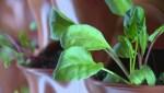 Foodbank Greenhouses
