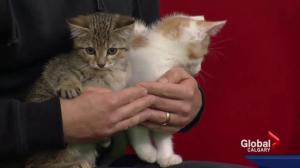 Pet of the Week: Hector and Gilroy