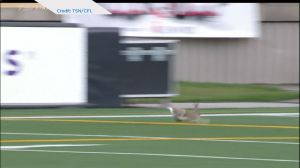 Jack rabbit steals the show at Labour Day Classic in Calgary