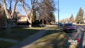 Dog shot and killed by intruders in Lethbridge home invasion: police
