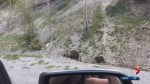 No stopping warning on Highway 93S because of bears