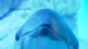 Park Board votes to ban captivity of new cetaceans at aquarium