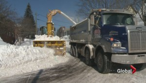 Severe winter weather means more work, and profit, for some NB businesses