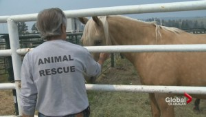 P.E.I man travels to Princeton, B.C. to rescue animals displaced by wildfire