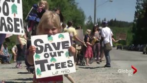 Powell River residents fight to save urban forest from logging
