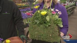 Gardening: Easter Planter