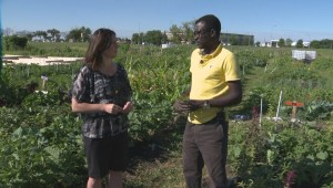 Better Winnipeg: Community garden provides more than tasty vegetables