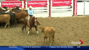 Cutting horse futurity at the Calgary Stampede