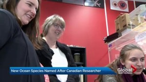 Canadian scientist deemed sponge-worthy