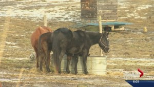 Animal cruelty concerns questioned
