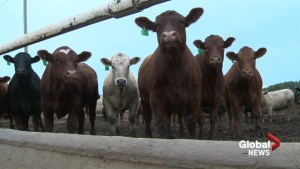 Lethbridge County considers agriculture tax for infrastructure funds