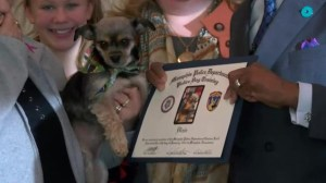 Alberta couple's dog becomes honorary citizen of Memphis, Tennessee