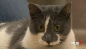 Gil Tucker: Smart Kitty