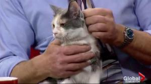 Edmonton Humane Society: Buck and Pebble