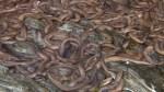 911 calls made after overturned truck dumps slime eels on Oregon highway