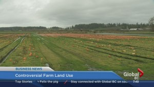 BIV:  Controversial farm land use