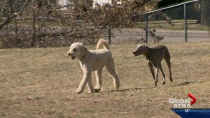Saskatoon city councillors support efficient animal noise complaint process