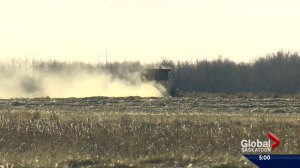 Warm spell renews harvest hopes for Saskatchewan farmers