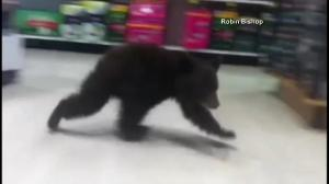 Bear cub recorded wandering the aisles of Oregon drugstore