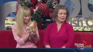 Month of Giving: Vancouver Orphan Kitten Rescue Association