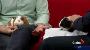 Pet of the Week: Apollo and Zeus