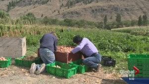 Okanagan Tree Fruit Project feeds the hungry
