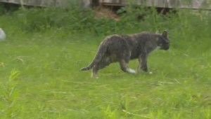 New Brunswick Cat Colony survey highlights cat colony problem
