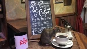 Rat café pop-up skittering into San Francisco in July