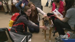 Therapy dogs ease student stress during exams