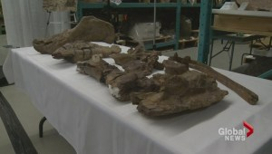 New dinosaur specimen revealed in Ottawa history museum