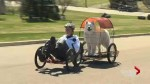 Moncton man with sight problems builds unique ride for himself and his dog