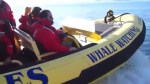 Collision between whale and whale-watching boat near Victoria injures three people