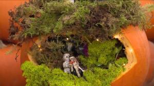 Gardening: Spooky fairy pumpkin