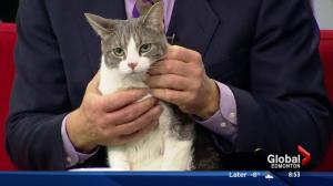 Edmonton Humane Society: Digger & Molly