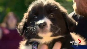 Puppy parties a success at Saskatoon businesses