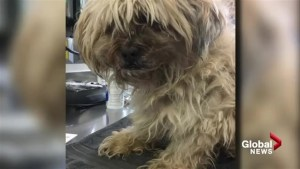 Hunt is on for owner of abandoned dog that had to be euthanized in Calgary