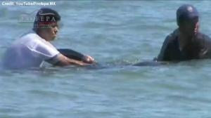 Rescuers manage to save 6 whales on same beach where 24 died earlier this week