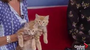 Adopt a Pet: Simba and Mufasa looking for new homes