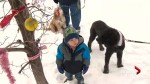 Christmas decorations dazzle Calgary canines