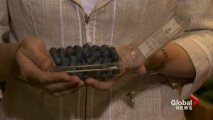 Nutrition: Local B.C. blueberries