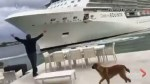 Cruise ship gets extremely close to couple's private waterfront