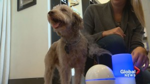 Pooch paradise: Calgary business invites the woofers to take a whiff