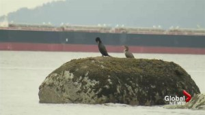 English Bay oil spill: Growing number of questions