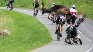 Triathlete knocked over by deer in Dublin; completes race in under 2.5 hours