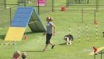 Dog agility championships