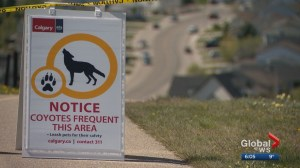 City of Calgary closes access to northwest park after coyote encounters