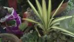 GardenWorks: Drought tolerant plants