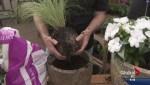 Gardening: Giant Gift for Mom