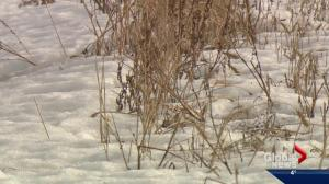 What does less snow mean for crops?